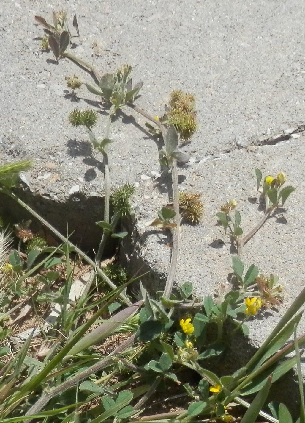 a sticker plant by the sidewalk